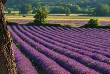 Provence 🍇🇫🇷