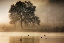 Photography I love / by Susan Van Heemst