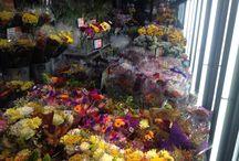CUT FLOWERS / Cutflower