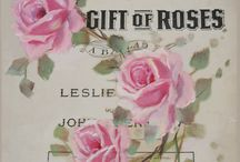 Jo-Anne Coletti rose paintings