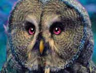 Owl / by Robin Tufts