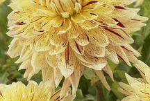 Flowers  / Beautiful flowers are everywhere.