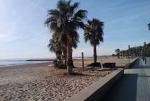 Naturaleza alrededor / Playa al atardecer, árboles y paisajes cercanos