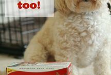 Wisconsin Doggy / Adventures and Product Reviews for Dogs - hosted by Roofus, the Wisconsin Poochon and Rescue Dog