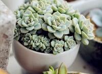 Cacti and Suculent ideas (kaktüs ve sukulent fikirleri)