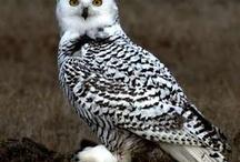 Owls / by Haley Putman
