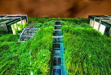 VertiCal GarDen, Palace Europa, Vitoria-Gasteiz, Spain. / El Palacio de Europa situado en la ciudad de Vitoria-Gasteiz ha sido un ejemplo a seguir por muchos profesionales del sector del diseño de jardines verticales y paisajismo urbano. Un ciudad que destaca por el elevado nivel de vegetación y la cantidad de espacios verdes.