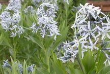 Wildflower Gardening / These plants will be the pride of your wildflower patch