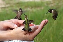 Soar / Birds make me want to fly. Hawks teach me how to soar with the ferocity + grace of a warrior. / by Lynn Fang