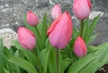 Eplehagen plantlist / Just a reminder of what Ive already got in my garden