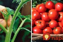 rajčiny