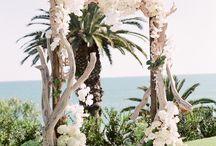 Kumda Düğün konsept