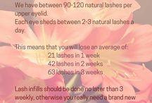 Lashes beauty
