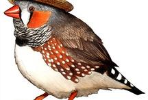 ptaci ilustrace