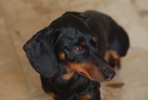 My dog ARTURO / he is 5 years old... <3