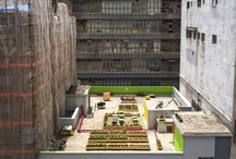 Urban Vegetable Gardens