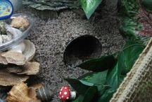 Hermit Crabs / I have three hermit crabs named Blu due to his blue shell, Claws because the first time he came out he pinched me, and last but not least Danger because he is very very adventurous  / by Madalyn Baughan