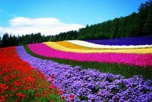 Hokkaido, Japan 北海道 日本 / 北の美しい景色・光景