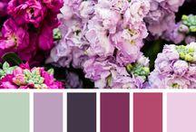 Color Schemes / by Amanda Quillen