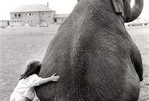 Sweet Animals / by Liz Hart