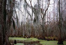 Voodoo Swamp