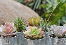 Green / Gardening / by Julie Lynn ♡