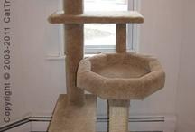 kedi evi-tırmalama evleri