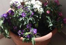 Τα λουλούδια μου.