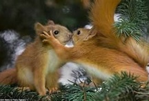 animals - chipmunks/ squirrels / by Cindy Hertz