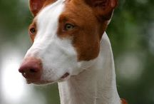 A.B.T.I.W. / Awesome Breeds That I Want