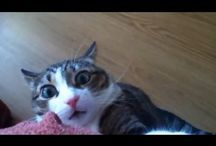 Funny Cat Video/ <3  / by Nancy Melton