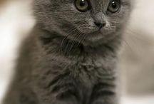 kis macskák