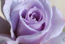 en violet