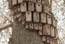Fuglehuse / Birdhouse project!
