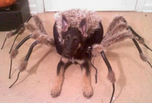 Devil Halloween Costumes