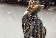 SNØ  - den første snøen
