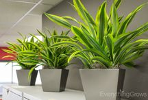 Office Plants / Office plants in commercial spaces
