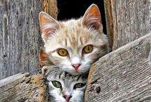 cats,pisici