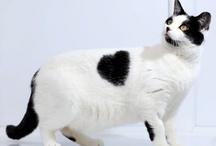 Koty, zabawne, romantyczne :-)