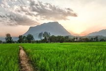 Chiang Mai | Thailand / Travel destination