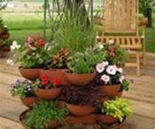 Jardinagem / Suculentas, flores, frutíferas em vaso