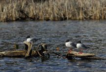 Wildlife of the Wetlands