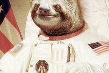 Sloths / Pin anything about sloths . Follow this bored and I'll do my best to invite you . Feel free to invite friends