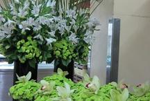 Floral arrangements / by Margaret Brown