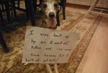 Puppy! / by Jenn Cross