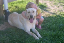 Memphis our yellow lab   / by Mark-andTammy Bradley