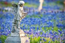 Cemetery / by Stacey Fox Kingston