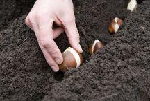 Что и когда сеять и сажать