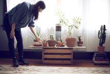 House Plants / House Plants, container plants, design plants