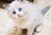 kittens n puppies <3